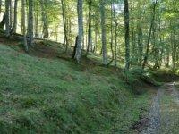 Foreste asturiane