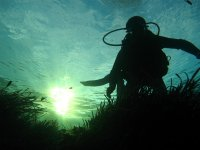 跳水在日落nudis