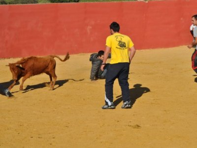 Amateur bullfight 2 young bulls + games + rebujito