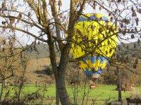 Instántanea del globo tras los árboles