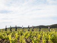 Segway route between the vineyards