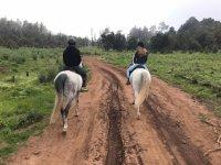 Walking the road on horseback