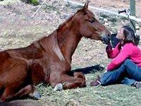 我们的马在塔拉戈纳骑