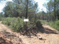 caminos y bici