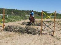 On horseback over obstacles