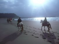 With horses along the beach
