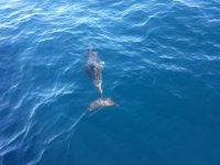 Delfin bajo el agua