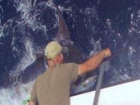 Soltando el anzuelo a un Marlin azul