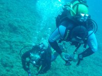 Observando el fondo marino
