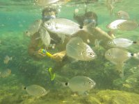 Snorkeling among fishes