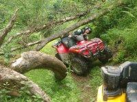 Esquivando la rama