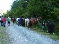 Preparando a los equinos en la salida