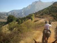 Road to the mountain with the horses