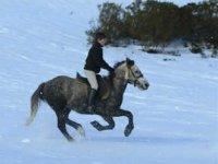 Galopando en la nieve