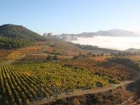 Viñedos en la Rioja