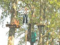Realizando el paso entre árboles