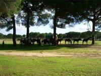 Passeggiate a cavallo attraverso Donana
