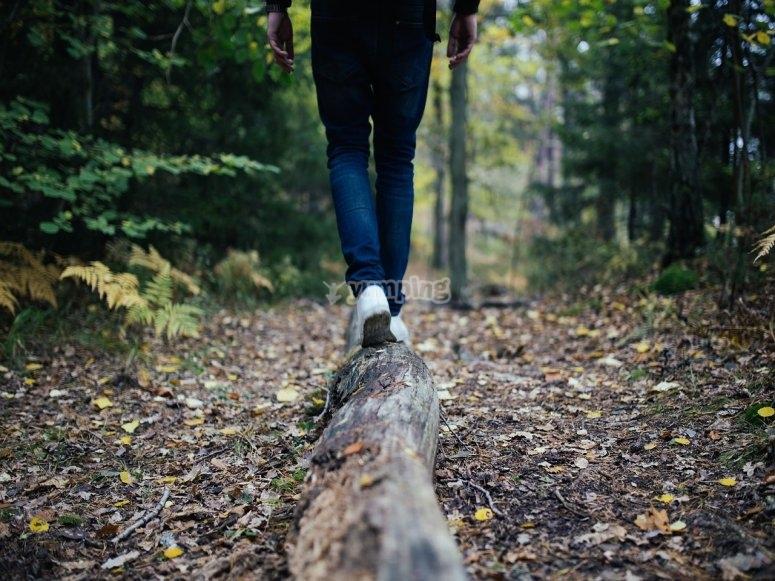 步行穿过树干