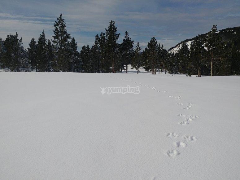 Rastro de las raquetas de nieve