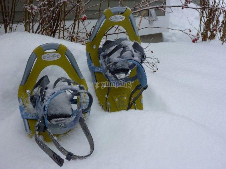 Raquetas de nieve en el bosque