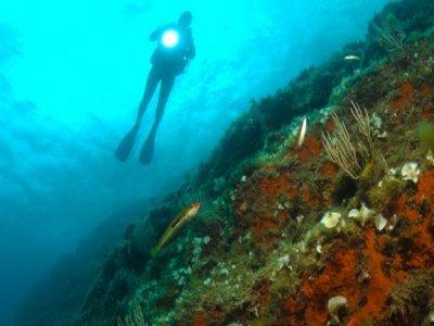Cips Diving Center