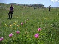 los campos mas hermosos