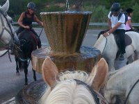 Horses drinking at the fountain