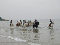 Equine excursion in the sea