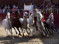 espectaculo de caballos