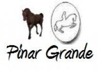 Pinar Grande