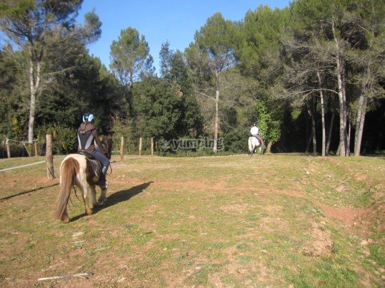 On horseback across the forest