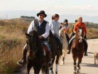 Descubre nuestros caballos