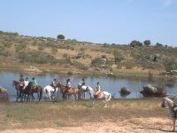 Horses refreshing