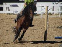 Iniziazione all'equitazione