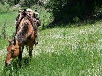 Escursione a cavallo a Vizcaya