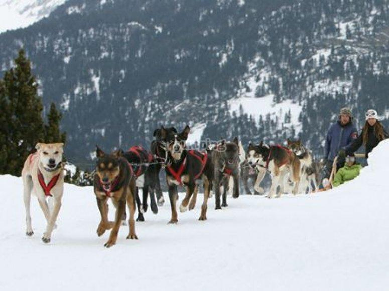 Mushing - Trineo con perros