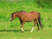 马在草丛中