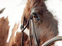 Uno de nuestros equinos