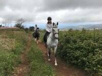 Excursión a caballo por Tenerife