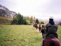 马匹与vilaformiu