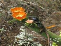 Una fauna y flora muy especial