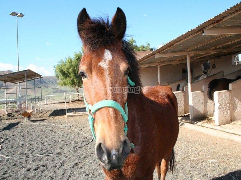 Lanzarote horseback