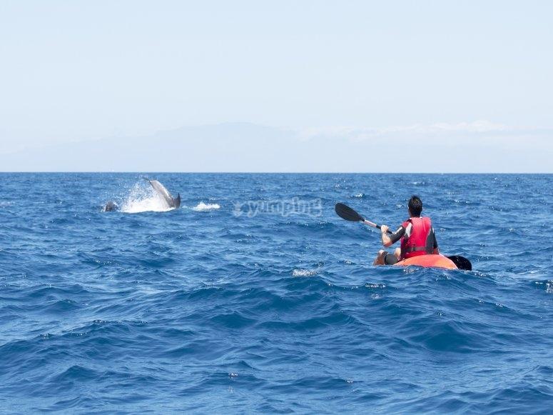 Avistamiento de delfines Tenerife