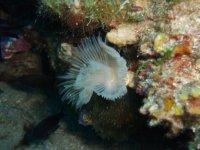Formaciones entre los corales