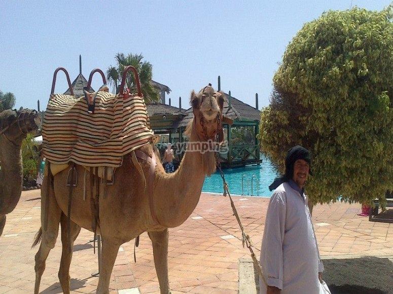 Ven y monta en camello