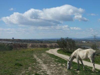 Rutas a caballo en La Dehesa