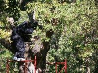 Subido en el árbol