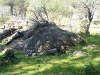 Tumbado tras la gran roca