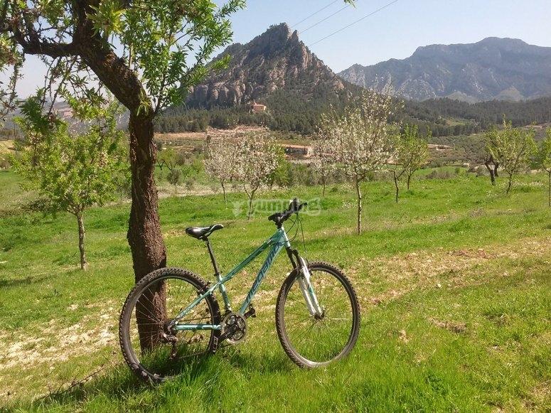 自行车在自然中间