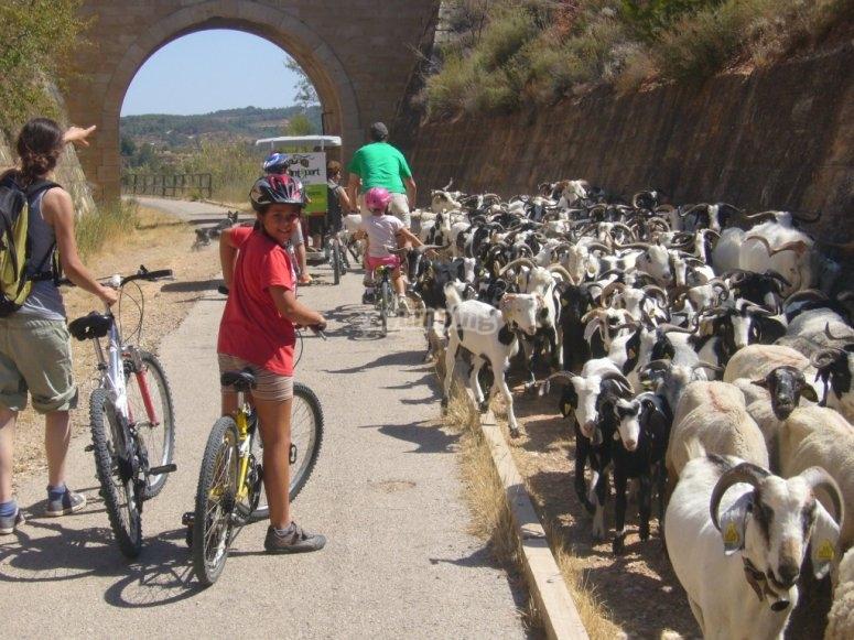 Rutas por Horta de Sant Joan